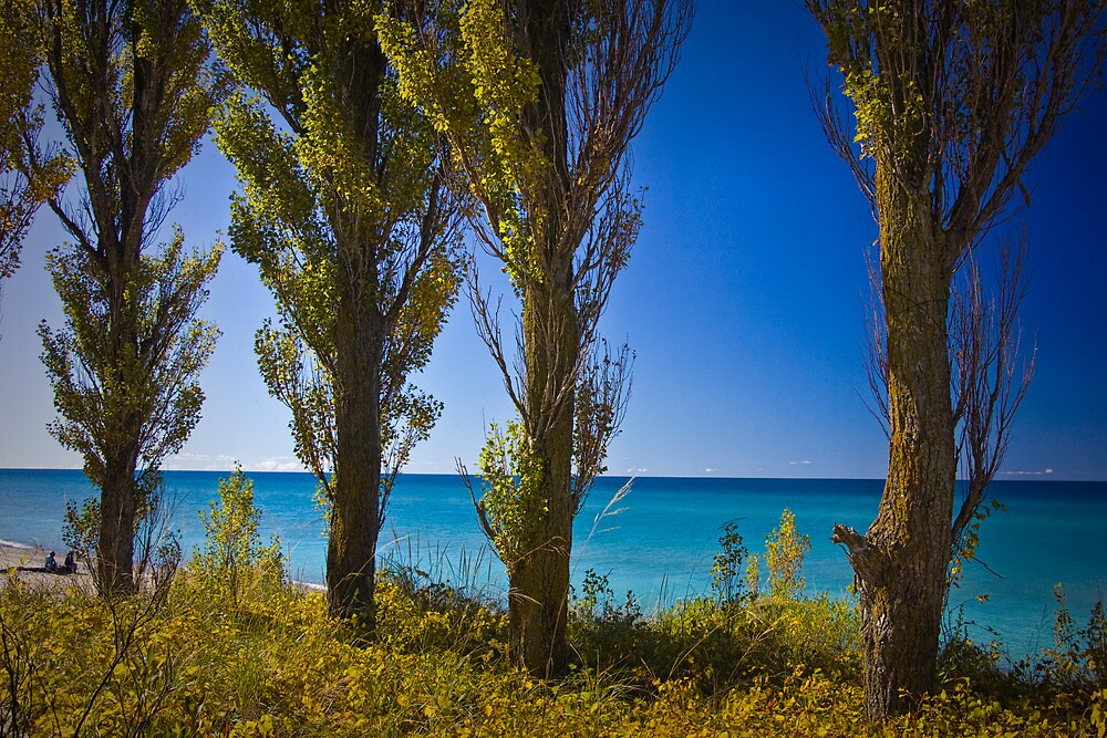 Row of Cypress Trees at Point Betsie by Randall Nyhof