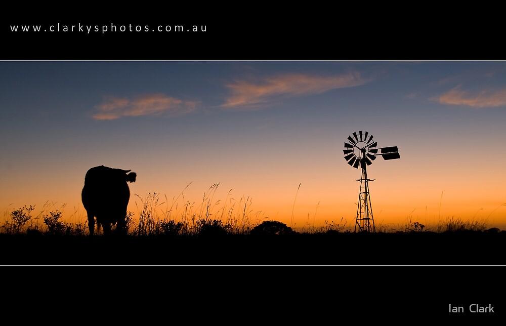 The Cow by Ian  Clark