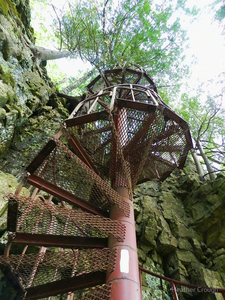 Stairway to the tree tops by Heather Crough