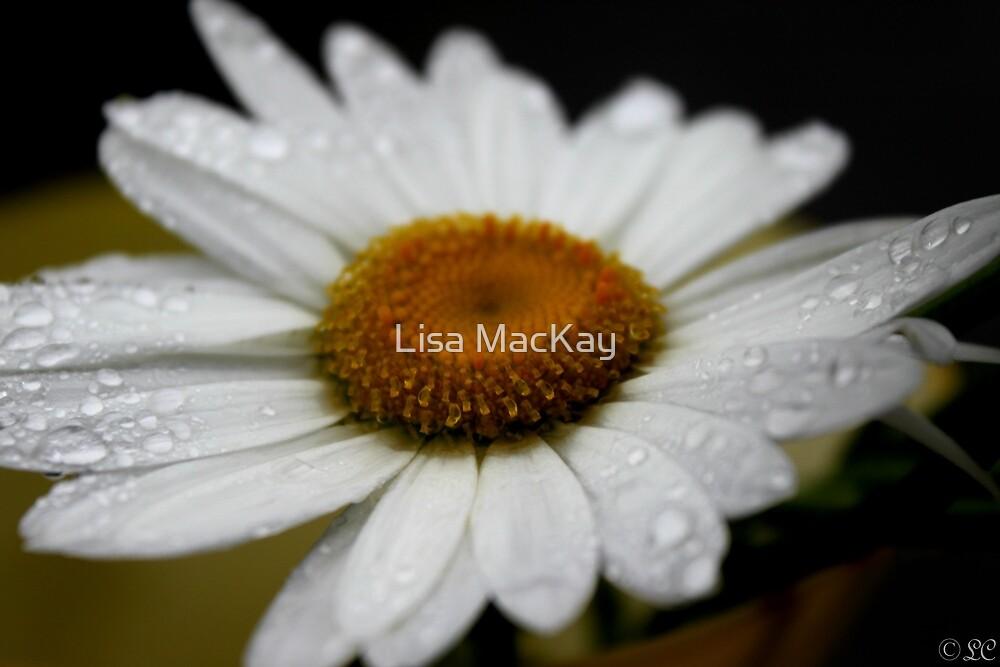 Daisy Beauty by Lisa MacKay
