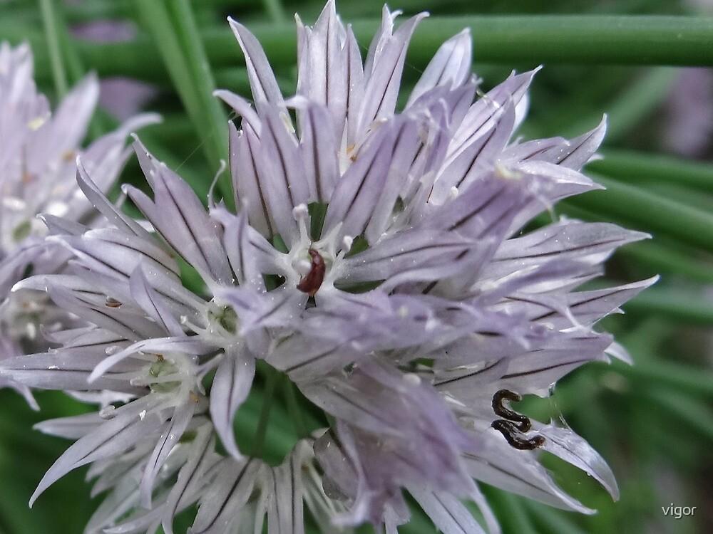 A bug's life by vigor