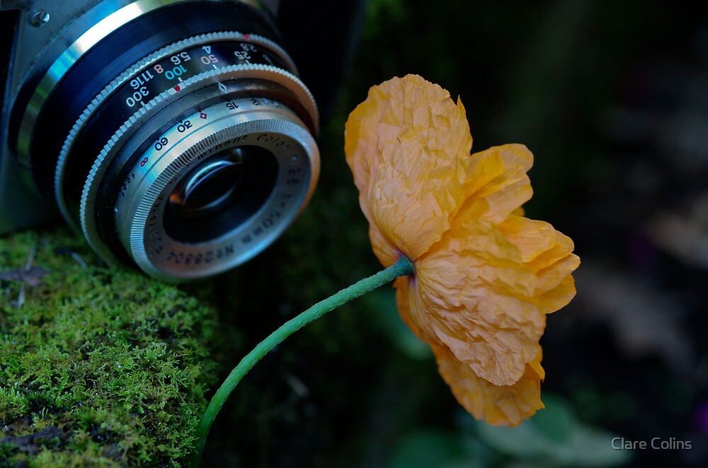 Macro Moment by Clare Colins