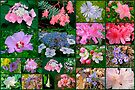 Floral Collage 2 by MotherNature