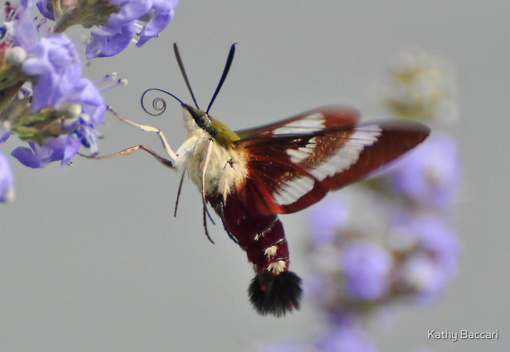 Clearwing Hummingbird Moth by Kathy Baccari