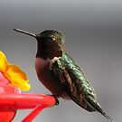 Pretty Lil HummingBird # 1 by gypsykatz