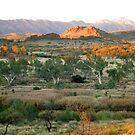 Dusk in the Desert - Central Australia by Lyn Fabian