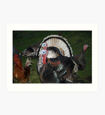 Turkeys! Art Print