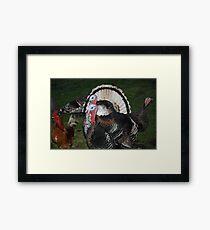Turkeys! Framed Print