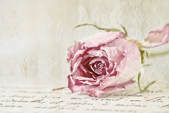 French Lace Rose by Evelyn Flint