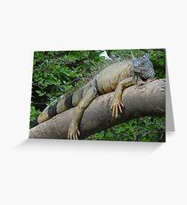 Iguana royal at the River Cuale Greeting Card