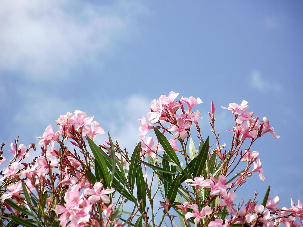 Nerium Oleander by SophiaDeLuna