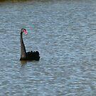 Black Swan by DEB CAMERON
