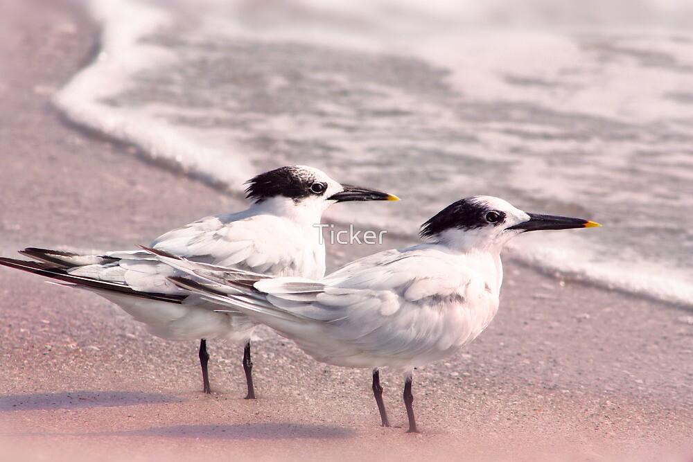 Romantic Terns by Ticker
