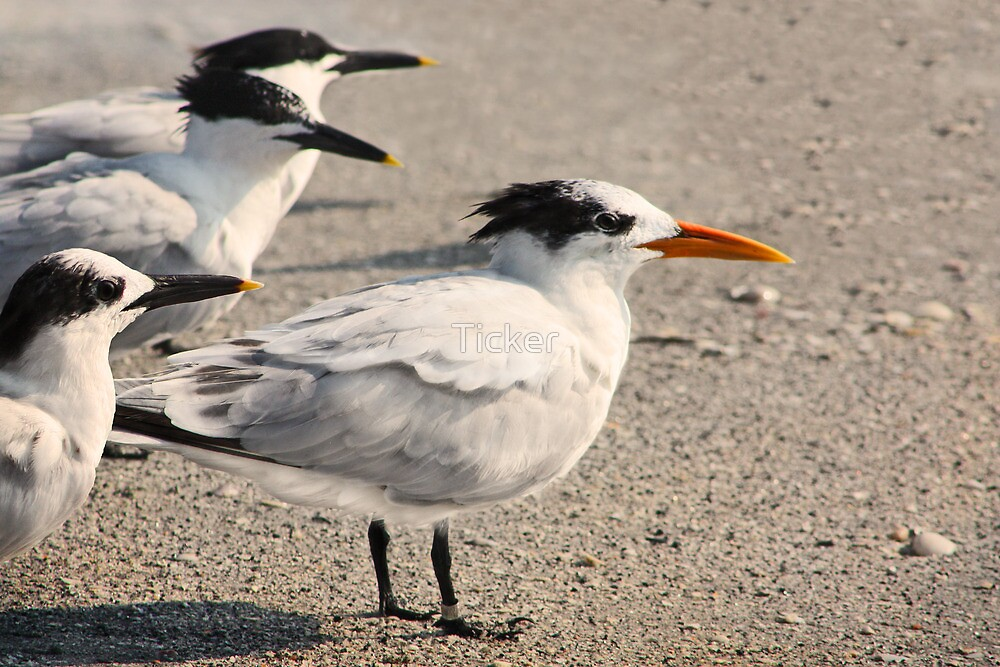 As the World Terns by Ticker