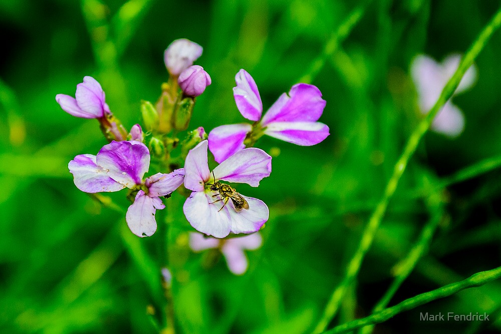 Purple Flowers with Fly by Mark Fendrick