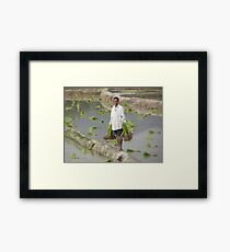 Planting Rice in Rural Laos Framed Print