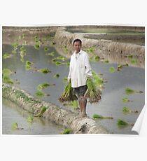 Planting Rice in Rural Laos Poster