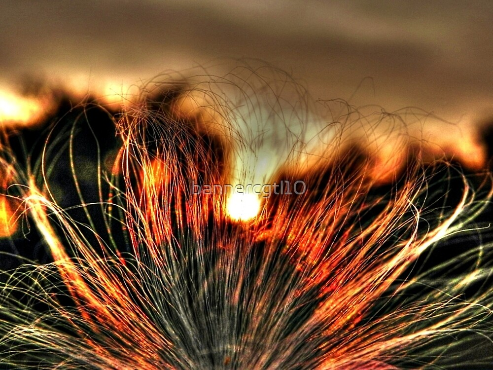 Sunset through Milkweed seed by bannercgtl10