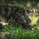 Yes I Am A Lovely Cat, Can You Take Me Home With You? by Jane Neill-Hancock