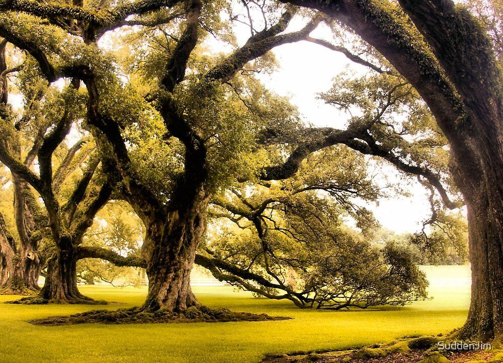 Oaks by SuddenJim