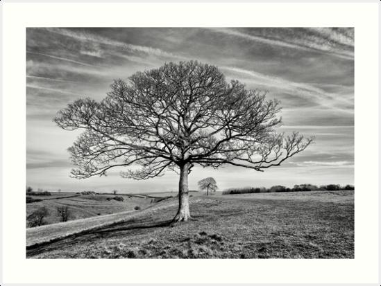 Skeletal Tree by Patricia Jacobs DPAGB LRPS BPE4