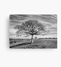 Skeletal Tree Metal Print