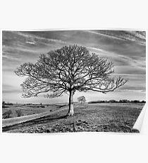 Skeletal Tree Poster