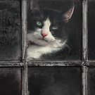 Black and White Cat by Patricia Jacobs DPAGB BPE4