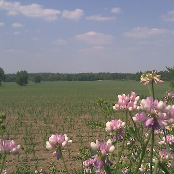 The Bean Field by TMcVey