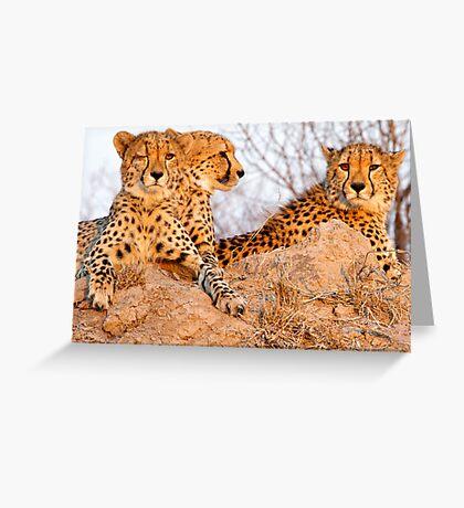 Do Cheetah Wink? Greeting Card