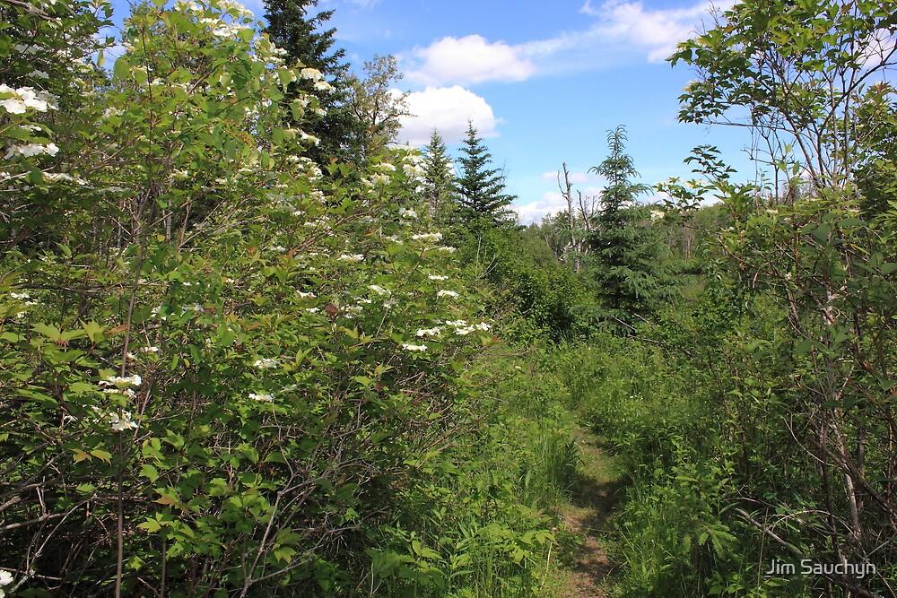 Salmonberry trail by Jim Sauchyn