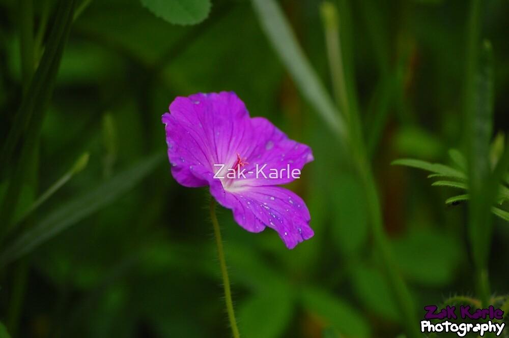 Purple/Pink flower by Zak-Karle