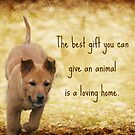 The Best Gift by DebbieCHayes