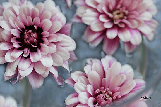 Pretty Pink by Rosemary Sobiera