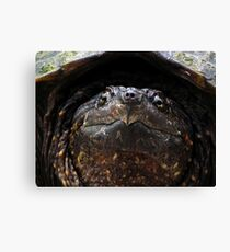 Snapping Turtle Canvas Print
