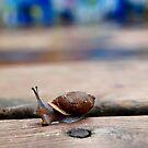 Snail by Raquel Perryman