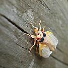 Bug! by Raquel Perryman