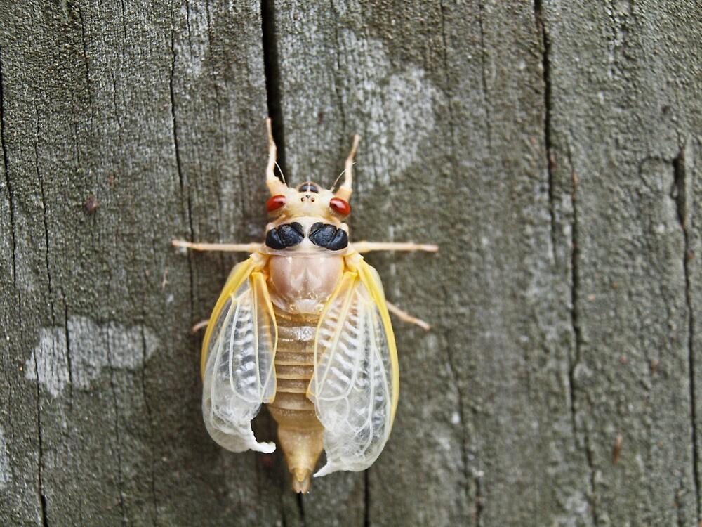 Bug2! by Raquel Perryman