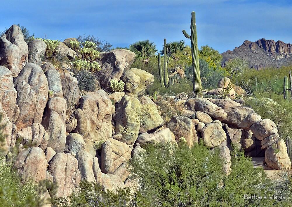 Desert Scene by Barbara Manis