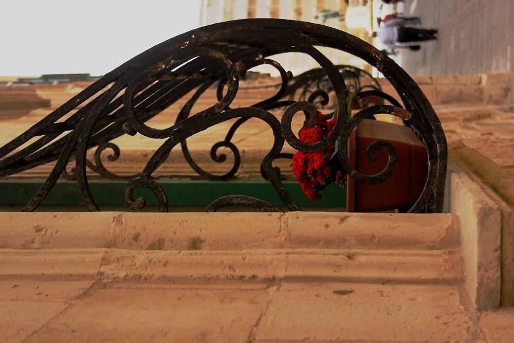 Maltese Pregnant Window by DRDJ