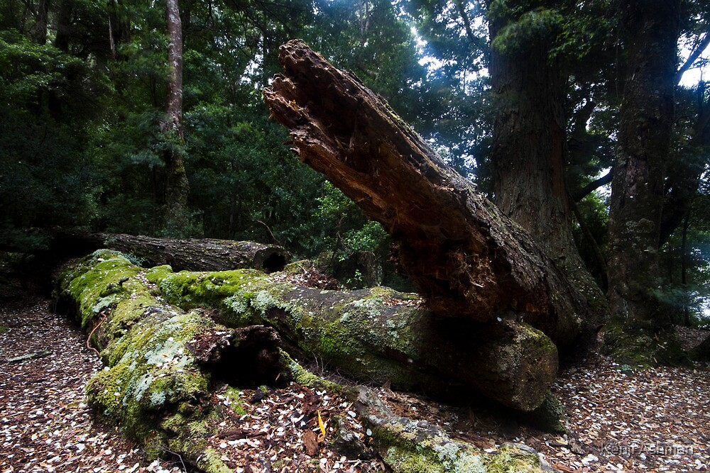 Fallen Tree by Kenji Ashman