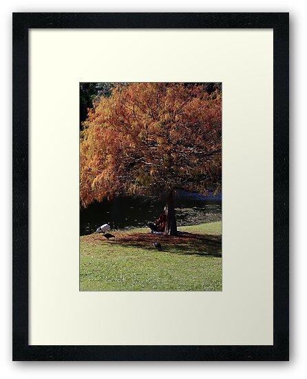 Autumn Leaves by Noel Elliot