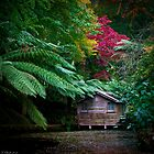 Isolated by Darren Clarke