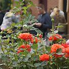 Cafe Roses by BronReid