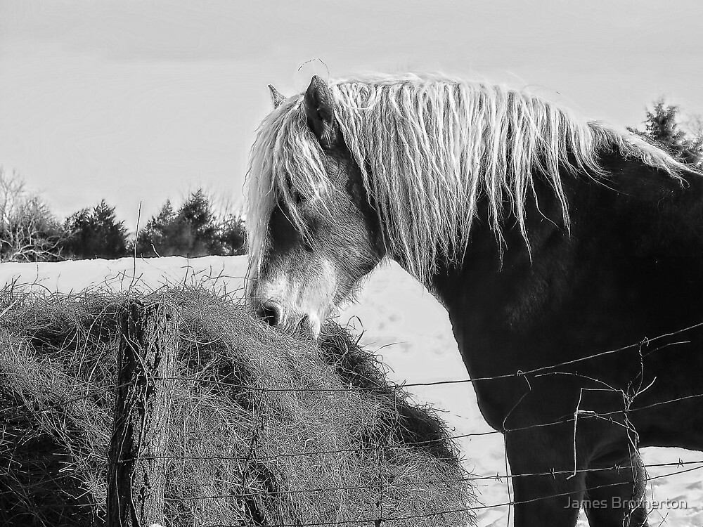 Horse And Hay by James Brotherton