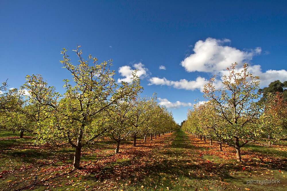 Apple Orchard - Autumn by pennyswork