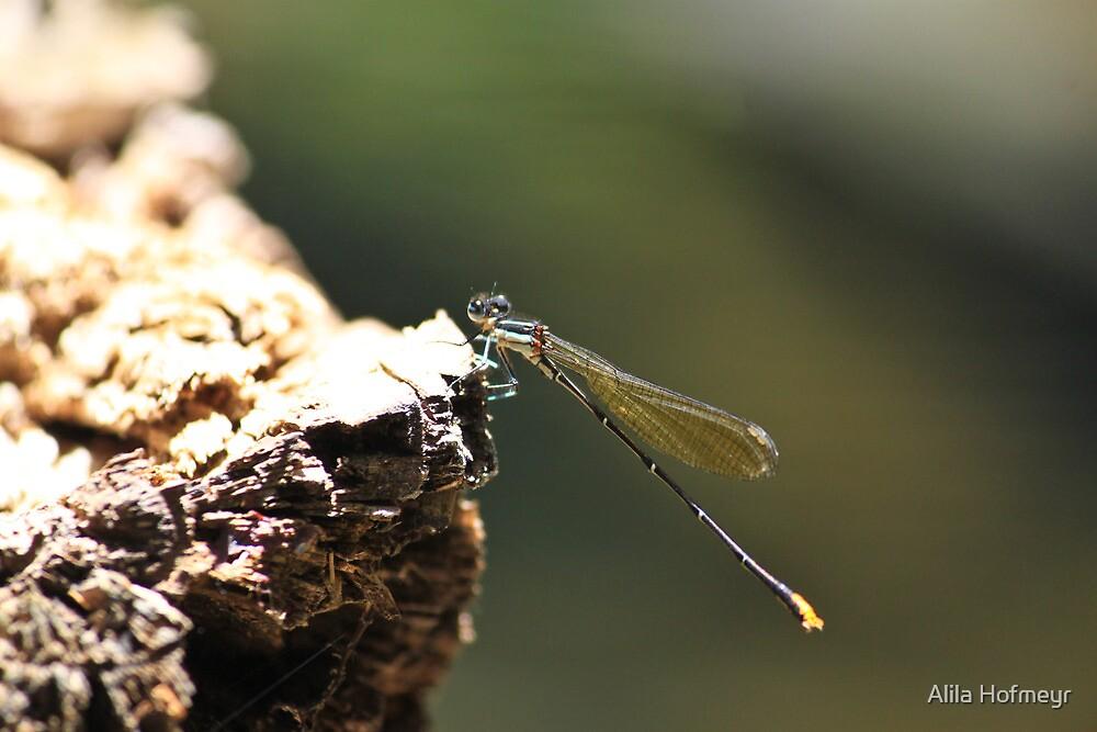 dragonfly by Alila Hofmeyr
