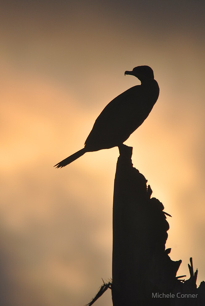 Cormorant Profile by Michele Conner