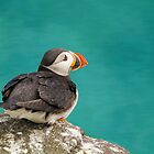 Puffin on cliff by M S Photography/Art