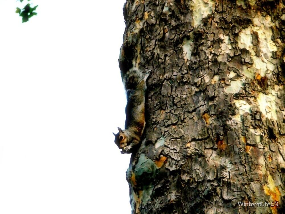 Just hangin by Wintermute69